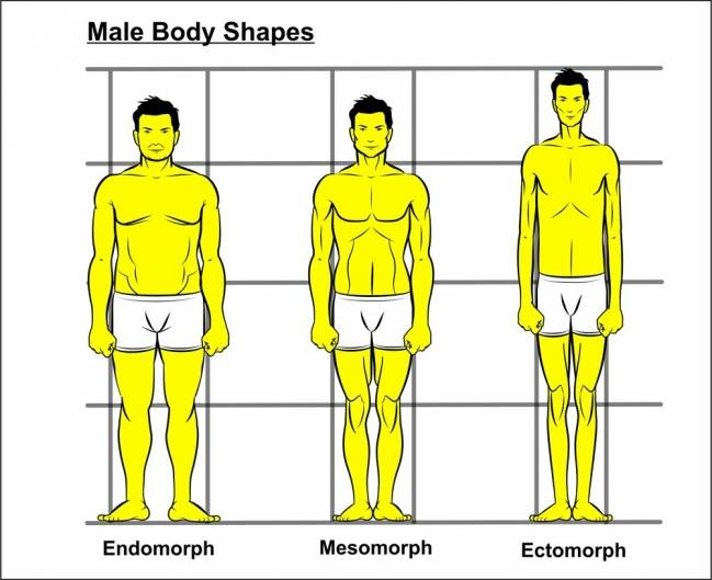 /sites/testbiotechusashop/documents/blog/_extra/201/o_Male_Bodytypes_20150713104332.jpg