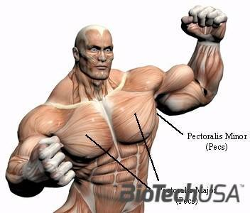 /sites/testbiotechusashop/documents/news/_extra/1250/o_chest_muscles_20121031132256.jpg