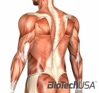 /sites/testbiotechusashop/documents/news/_extra/1251/o_muscle_20121031133815.jpg
