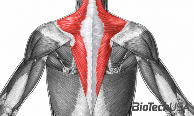 /sites/testbiotechusashop/documents/news/_extra/1962/o_trapezius1350347779014_20160808122614.png