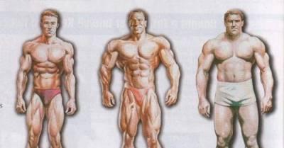 endomorf alkat diétája